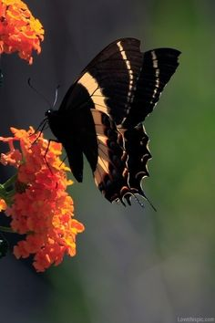Macro butterfly photography outdoors nature flowers butterfly insect