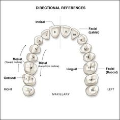 Sharp Oral Surgeon The Dentist Dental Assistant Study, Dental Hygiene Student, Dental Procedures, Dental Hygienist, Dental Life, Dental Health, Dental Surgery, Dental Implants, Dental Terminology
