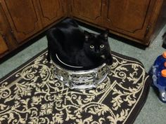 May I have a drum roll please? Submitted by: Cassandra Katine Marmon #blackcat #blackcatsrule #catoftheday #cat #meow #catlover #whatcatsdo #catsinfunnyplaces #instacat #catstagram #catsofinstagram #funnycat