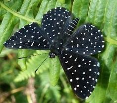"""simply-beautiful-world: """" Brazilian Butterfly """""""