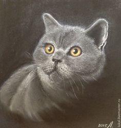 Купить Картина британская короткошерстная кошка. Пастель. - британская порода, графика, кот, портрет животного