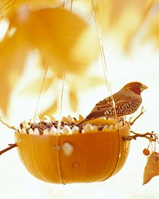 Martha Stewart pumpkin bird feeder. Children can help after the cutting is done. Bird watching. Science.