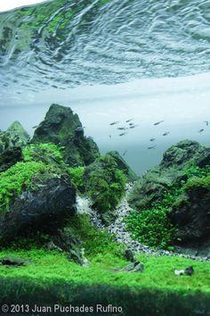 2013 AGA Aquascaping Contest - Entry #8