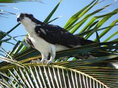 Wildlife at Sanibel Island!