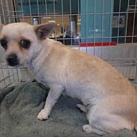 RIP Sweet Baby girl. Chatsworth, California - Chihuahua. Meet COCO, a for adoption. https://www.adoptapet.com/pet/20142691-chatsworth-california-chihuahua
