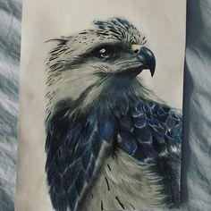 Eagle / Adler / Pencildrawing / Realistic