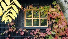 Mediabibliotek ‹ AMJ trädgårdstjänster — WordPress My Design, Wordpress, Garden, Painting, Art, Art Background, Garten, Lawn And Garden, Painting Art