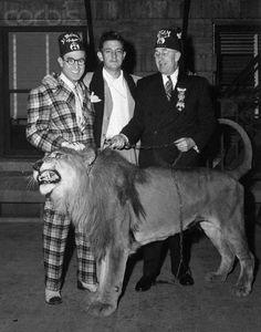 harold lloyd + lion + friends