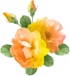 Yellow Orange Rose Transparent PNG Clip Art