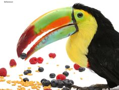 Do birds waste food on purpose or is it a natural behavior of parrots in the wild?