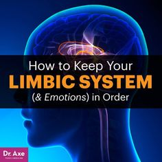 Limbic system - Dr. Axe http://www.DrAxe.com #health #holistic #natural