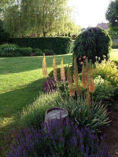 My garden summer