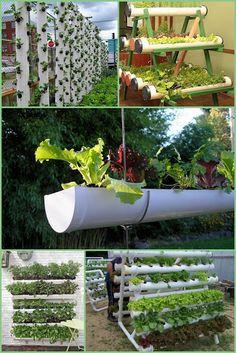 Nutrir&Ação : Plantando no quintal - Horta saudável na mesa!