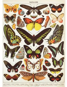 Vintage butterflies. Not that these butterflies don't exist anymore, but... you get what I mean.