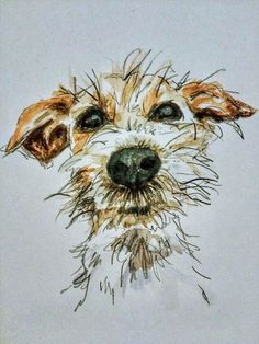 Watercolor representing a small barbet dog type fox terrier or related . - Watercolor representing a small barbet dog like fox terrier or related. It is very nice, this doggi - Animal Paintings, Animal Drawings, Art Drawings, Drawing Art, Drawings Of Dogs, Dog Face Drawing, Cat Face, Black Art Painting, Fox Terriers