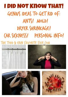 I Did Not Know That! Ants! Mold! Car Sickness & More! Simple life hacks that make you look utterly brilliant.