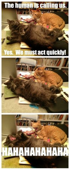 I don't need your sarcasm, cats…
