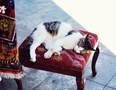 istanbul cat 3 by catalina.b, via Flickr