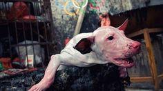 Petition · Thomas Massie: Boicot a los Juegos Olímpicos de Invierno de Pyeongchang 2018 en Corea del Sur · Change.org
