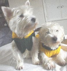 Knitting Pattern For Staffie Dog Coat : Small Dog Coat Dog sweaters to KNIT & Crochet.. Patterns ...