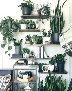 928 Best Artificial Plants Living Room Crate And Barrel ...