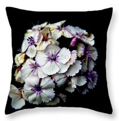 PhotoArt Web - Nice-Webb Galleries Galleries, Nature Photography, Throw Pillows, Nice, Toss Pillows, Cushions, Nature Pictures, Decorative Pillows, Wildlife Photography