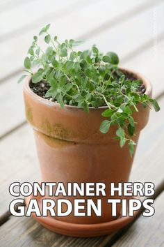 In this post, I will share with you 10 tips that will help you grow an amazing and very productive container herb garden. We will go over why I think that it's better to grow herbs in containers instead of in the garden and I'll share my experience and personal tips for growing better herbs from soil to watering and feeding. Let's create a fabulous herb container garden! Container Herb Garden, Growing Herbs, Gardening Tips, Natural Remedies, The Help, Harvest, Garden Ideas, Planter Pots, Fruit