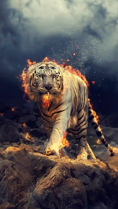 Angry, raging, white tiger, 1080x1920 wallpaper