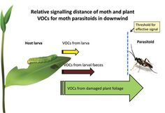 Chemistry News | Plant Communication: Pheromones Emit Chemical Distress Signals