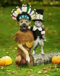 Funny dog and cat photos dressed up as indian and pilgrim, friends at last