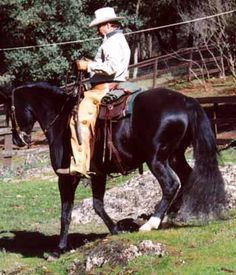 Exercises Under Saddle to Strengthen the Horse's Back   Cowboy Dressage™ at Wolf Creek Ranch