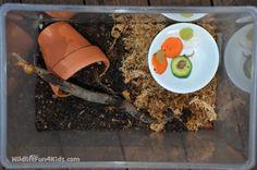 Keeping Garden Snails as Pets | Wildlife Fun 4 Kids
