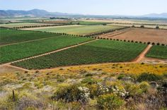 Bienvenidos a los valles mas sureñas de viñas en la republica mexicana. Contribuyen al crecimiento de la produccion de vino nacional y el desarollo de la calidad y de las ventas.     Actualmente, Freixenet ha dado un impulso de renovacion a la zona vinicola de Queretaro.
