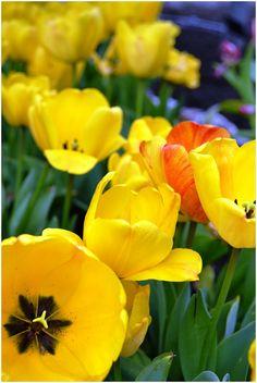 10 best flower symbolism images on pinterest beautiful flowers diy wedding resource free online wedding flower guide mightylinksfo