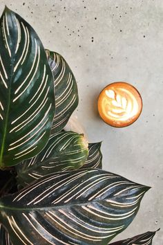 Your Round Up of Charlotte's Coffee Shops: Just like that, you'll find you've once again reached the beginning of a new week. where did the weekend go? Was there even a weekend? Coffee Shops, New Week, Plant Leaves, Finding Yourself, Kittens, Charlotte, Range, Play, Simple