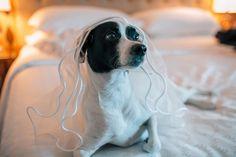 Casamento Ana e Luís – Hotel Sheraton Porto Alegre RS - Renan Radici Wedding Photography - 2015