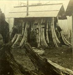 Stump Houses. Interesting bit of history in the Pacific Northwest region.