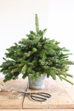 Craftberry Bush   Tabletop Christmas Tree Using Free Clippings   http://www.craftberrybush.com