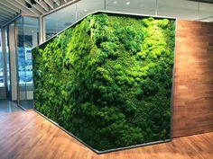 Beautiful, Custom Moss Walls & Panels Our moss art can wrap around corners for a strikin Moss Wall Art, Moss Art, Building A Pergola, Pergola Plans, Planting Bulbs In Spring, Vertikal Garden, Garden Wall Art, Garden Walls, Plantas Bonsai