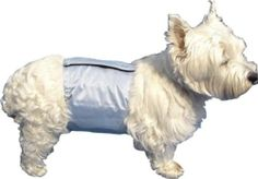 PoochPad PPMME01 PoochPant Male Wrap - Medium - 16 to 22 Inch - http://www.thepuppy.org/poochpad-ppmme01-poochpant-male-wrap-medium-16-to-22-inch/