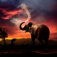 Image source: Elephant Cooling down by Caras Ionut