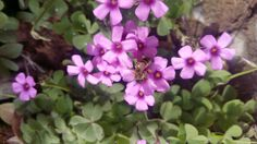 beautiful flowers and a diligent bee