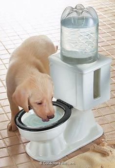 Refilling Dog Toilet Water Bowl.  Use with a liter plastic bottle. Too Funny! Collections etc.