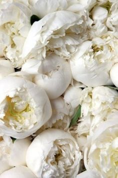 Pivoines blanches - I have never seen them in white before - so pretty :)