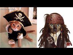 Gatos Disfrazados y graciosos chistosos gatitos tiernos con disfraces locos videos divertidos ➡⬇ http://otrascosasvirales.com/gatos-disfrazados-y-graciosos-chistosos-gatitos-tiernos-con-disfraces-locos-videos-divertidos-2/ #newadsense20