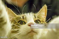 Best pet selfie  http://www.emmabaker.co.nz