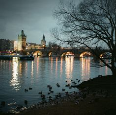 sailaway-fromthesafeharbor:  Prague, Czech Republic (by Tabi**chu)