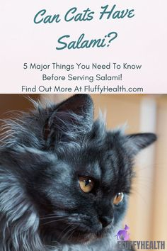 Can cats have salami? One of the questions frequently asked when pet parents are trying to introduce new food to their feline friends. But can it be incorporated into their meals? Can cats have salami? The fearsome of human foods allowed for cats is the only thing that ruins the snacking-time between pet parents and their cats. #fluffyhealth #thecattribe #catfood #salami #food #catlife Different Breeds Of Cats, Healthy Cat Food, Pregnant Cat, Cat Hacks, Cat Care Tips, Outdoor Cats, Fluffy Cat, Cat Health, Cat Life