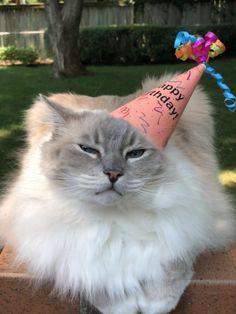 Happy 9th Birthday Trigg