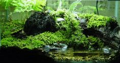 This would be a amazing tank for newman i know he would love walking threw the deep foliage                                                                                                                                                     More